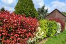 Après l'achat d'une maison à Tournefeuille, comment organiser les plantations dans le jardin ?